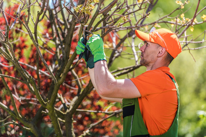 We are pruning a tree in this picture, as this encourages new and healthy growth throughout the Spring season. This process will allow the tree to live a long and healthy life.