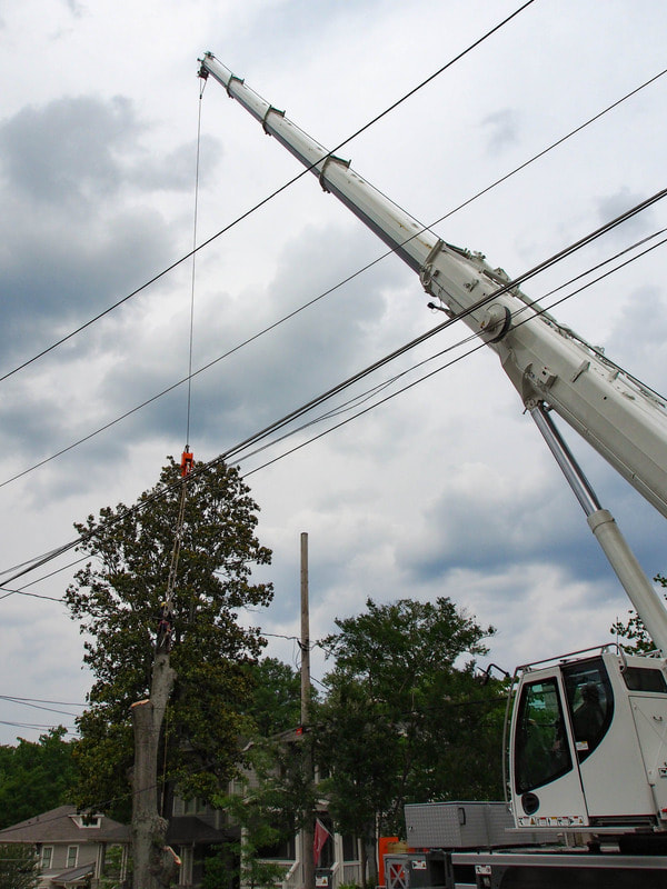 Here's our bucket machine that helps us remove or trim taller trees in a safe manner. It also helps to make sure we are damaging any nearby power lines as seen in this picture.